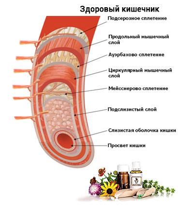 Пракшалан - здоровый кишечник