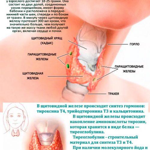 Теротозин Тибетская Формула - лечение щитовидки