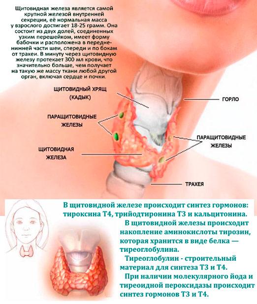 Щитовидная железа симптомы заболевания у мужчин узлы