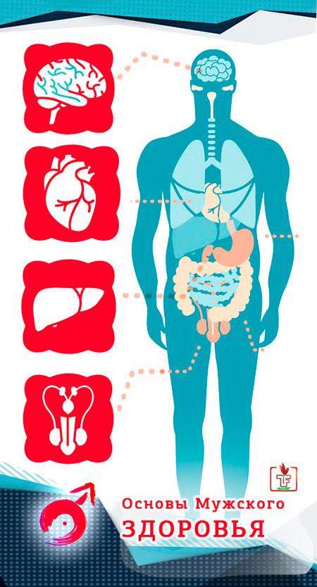 Основы Мужского Здоровья