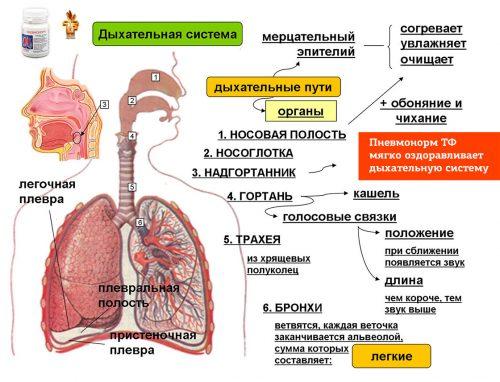 Пневмонорм Дуйко - Лечение воспалений дыхательных путей