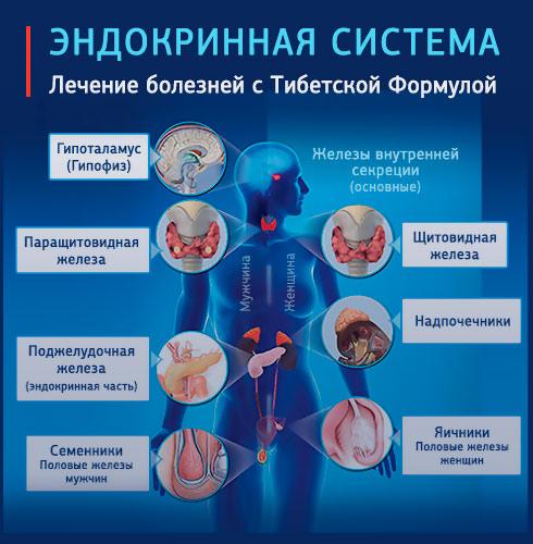 Эндокринные железы. Лечение щитовидной железы.Секреты Здоровья с Андреем Дуйко